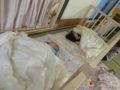 早速、2か月の赤ちゃんたちがお昼寝をして過ごしています。ZZZzz...
